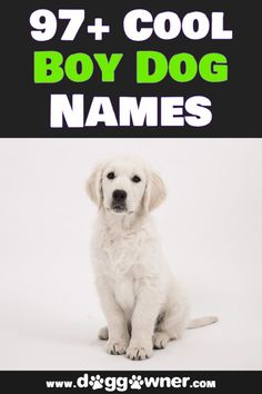 Did you just recently get a new adorable boy puppy? Well here are some great cool boy dog names for your cool new puppy! #dognames #coolboydognames #boydognames