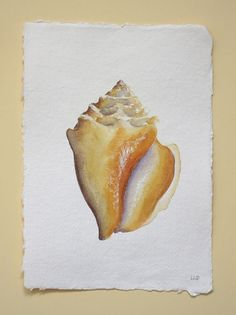 An original watercolour painting of a shell from my collection, a little treasure gathered at the oceans edge. Painted in artists quality