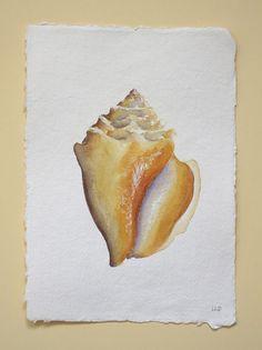 Original watercolour sea shell illustration by SeasideStudiosUK