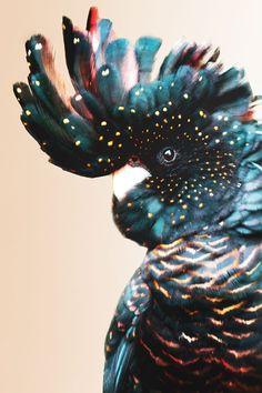 Poster van een kleurrijke kaketoe. Dit schilderij is beschikbaar op geborsteld aluminium / plexiglas / canvas / dibond / hd metaal / papier