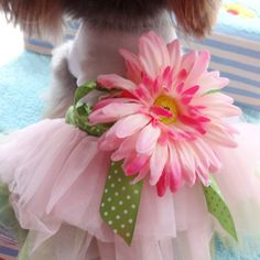 PanDaDa Dog Daisy Gauze Tutu Dress Skirt Pet Dog Cat Princess Clothes Bowknot Dress L >>> Click on the image for additional details.