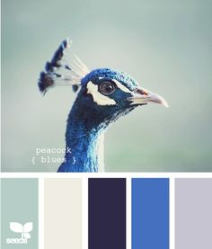 colour palette - dark blue