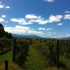 Vineyards where I live.