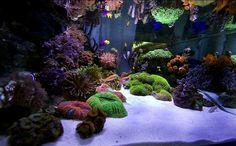 aquariums reef.jpg