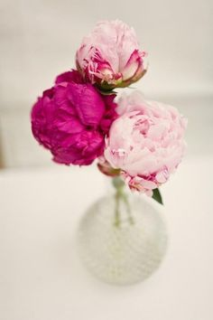 Gorgeous pink peonies | light and dark pink peony