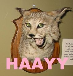 I would make all of my animals do this if I was a taxidermist @Hannah Garcia