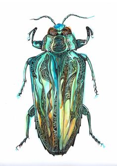 Pen and ink beetle on watercolour paper