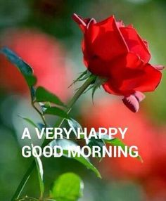 Good morning.....have a happy day