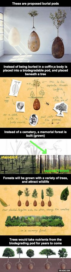 Die, and then give life to a forest. Sounds lovely.