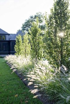 The repetition and mix of textures of European hornbeams and Cassian grass provide an architectural, eye-catching border.