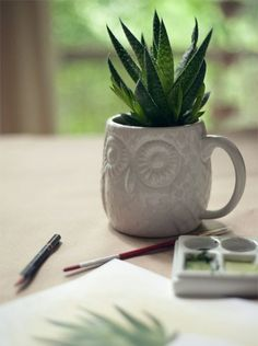 ¿Cómo cuido las plantas de interior?
