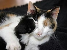 .Mom and kitten. Ever had your baby try to wash your face?