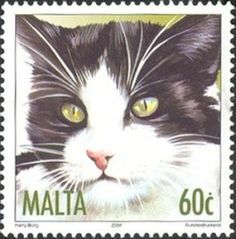 Stamp: Black and White Short-Hair (Felis silvestris catus) (Malta) (Cats) Mi:MT Vintage Stamps, Vintage Cat, Malta, Black And White Shorts, Postage Stamp Art, Stamp Collecting, Mail Art, Oeuvre D'art, Pet Birds