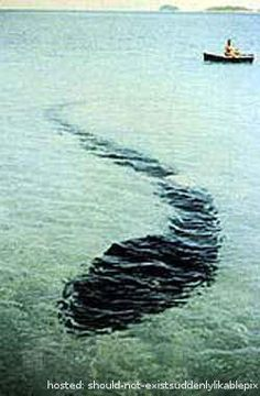 1 and 9 are easily explainable. 1 is possibly an oarfish. Looks just like one. Look it up. And 9, that is not the true story. That picture was taken just as the body fell from the rafters. It turns out it was the past tenants body and she had been murdered.  But the other one's were cool.