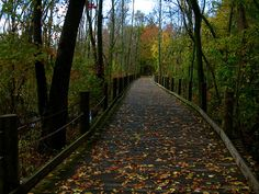 Crying. miss it so much. Mount Vernon Trail, northern Virginia. Had some fun walks along this trail.