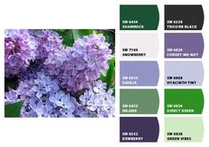 Lilacs - -Paint colors from Chip It! by Sherwin-Williams