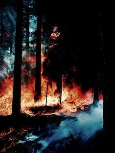 Fire In The Great Forest