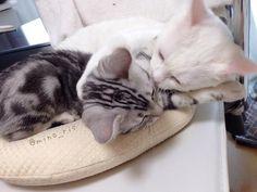 【毎日更新】あなたの心を癒やす…可愛すぎる動物画像まとめ - Togetterまとめ