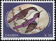 Western Violet-backed Sunbird stamps - mainly images - gallery format