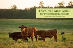 Free action to make grass greener in Photoshop and PSE via @amandapadgett at Everyday-Elements.net