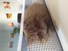Garfield recogiendo las pelitas del pin pon