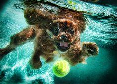 Bahahah underwater puppies