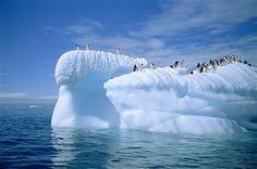 Adelie penguins on icebergs, Antarctica.