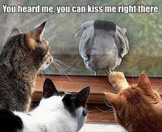 Funny cats, bird