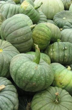 A autumn harvest of pumpkins in shades of sage green at Sage Farm.