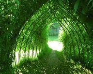 make a secret hideout with your garden...how fun for children!!