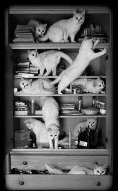 """One cat just leads to another--Ernest Hemingway......Yeah, it's true what they say, """"cats are like potato chips, you can't have just one""""."""
