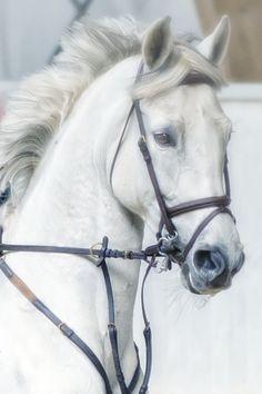 Horse portrait by Erik Kunddahl