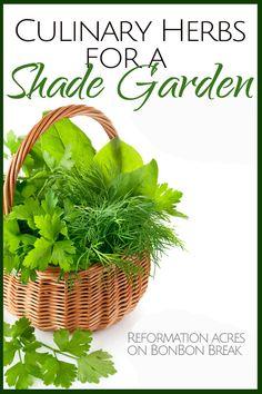 Culinary Herbs for a Shade Garden