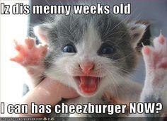 I can haz cheezburger!