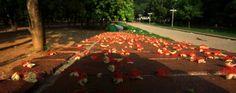 ঝরা ফুল দলে কে অতিথী  সাঁঝের বেলায় এলে ........................ love is some times the fallen flowers !!  copyright:abdul malek babul