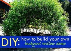 DIY Willow Dome