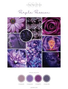 Colour Pallete, Color Schemes, Color Psychology, Purple Hues, Colour Board, Color Stories, Color Theory, Pantone Color, Wall Colors