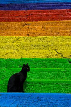 Black cat by Burcin Tarhan on 500px
