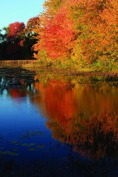 Osgood Pond, Milford NH by amiefedora, via Flickr. This is right down by my house! it is so gorgeous in the fall and winter!