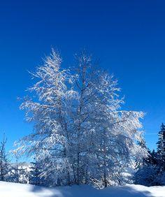 Snow & blue sky  Les Pras, January 2012  #snow #mountain #winter #nature