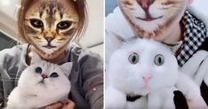 These cat reactions to seeing their owners 'cat filtered' faces are just way too cute! Best Cat Memes, Funny Cat Memes, Funny Cats, Creepy Cat, Therapy Dogs, Cat Face, Animal Memes, Cool Cats, Filters