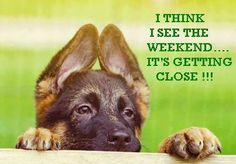 I Think I See the Weekend. It's Getting Close! Thursday Humor, Thursday Quotes, Its Friday Quotes, Friday Humor, Friday Pics, Friday Dog, Weekend Humor, Funny Friday, Good Morning Thursday