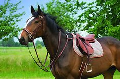 RIDING-WORLD-Top-Class-Vorderzeug-Groesse-Warmblut-schwarz-NEU