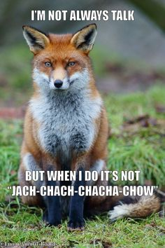 What Does The Fox Say I'm not always talk, but when I do it's not jach-chach-chacha-chow  Like in Ylvis – The Fox - What Does the Fox Say?  by Norwegian comedy duo Ylvis.   Lyrics   Via http://funnyanimalsboards.com/what-does-the-fox-say/