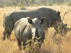 Help Stop Rhino and Elephant poaching in Africa #savetherhino