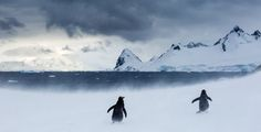 Follow The Leader Photo by Anthony Ponzo - 2015 National Geographic Photo Contest