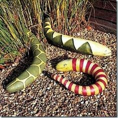 Painted Snakes Gourd