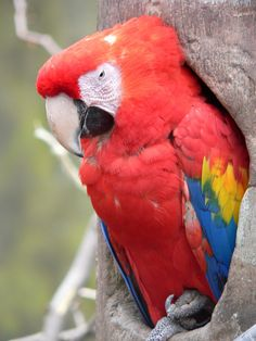 Parrot coming out to take a look at who is making all that noise and woke him up.