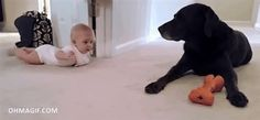 Cute baby bonding with the pet dog