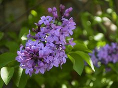 Pelion in Spring 2017 Spring, Plants, Plant, Planets